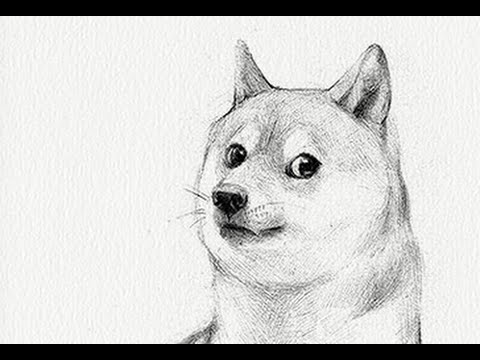 How To Draw Doge For Beginners Youtube