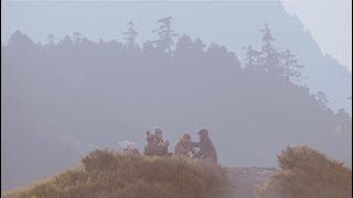 Cicada – 降落在金黃色草坡 Sunlit Grassland (Official MV)