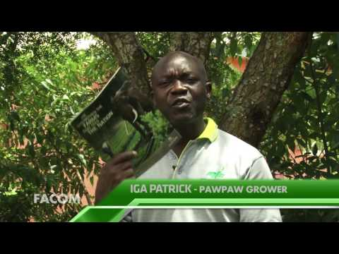 pawpaw growing with IGA PARTRICK