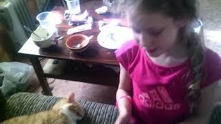Трек кошка часть 2