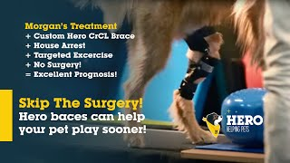 morgan on a treadmill in her dog knee brace