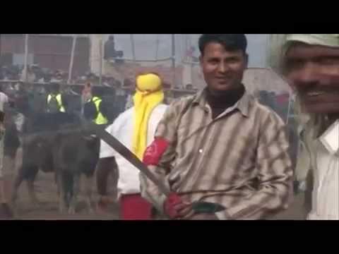 Animal Sacrifice at Gadhimai Festival in Nepal