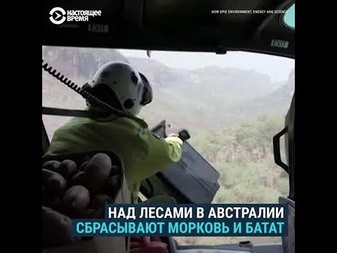 Зачем австралийские военные сбрасывают с вертолетов морковь и батат