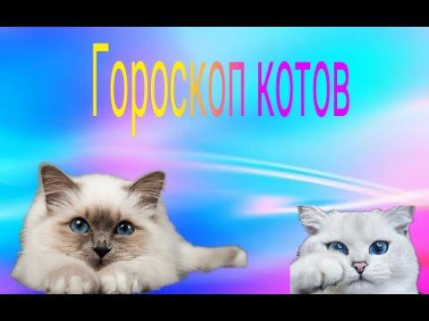 Картинки про котов читать