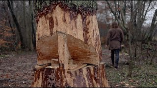 Viking - cutting down big tree with axe - how to