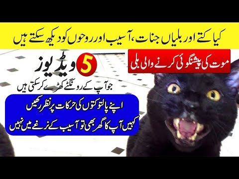 Cats and Dogs That Saw Something Their Owners Couldn't See - Purisrar Dunya