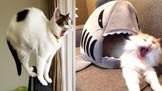 Run!!! Now 😂  | Funny Cats Video 2019