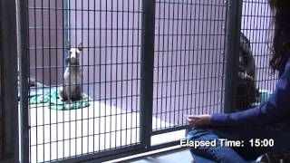 Reiki Brings Peace to Shelter Dogs Video