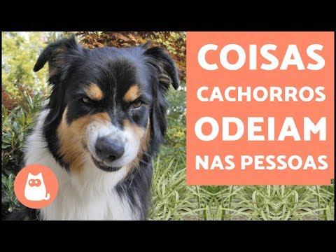 10 Coisas Que Os Cachorros Odeiam Nas Pessoas