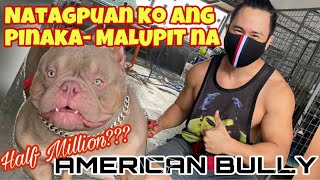 FIRST TIME TO BUY AN AMERICAN BULLY, ANG MAHAL PALA | BAYABAS KENNEL | SAM WALASTIK