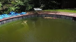 Neighbors Say Abandoned Pool Has Led to Mosquito Infestation