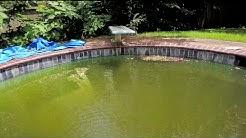 Neighbors Say Abandoned Pool Has Led to Mosquito Infestation