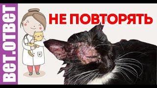 Рецепт лечения лишая кошек. НЕ ПОВТОРЯТЬ!