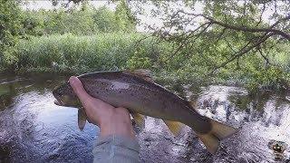 3 дня рыбалки в одном видео. Форель и щука