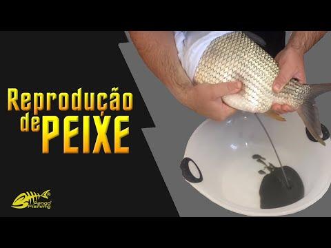 Reprodução e Larvicultura de Peixes Nativos Parte 3 - EXTRUSÃO
