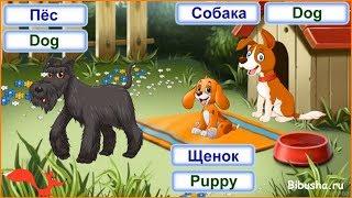 Домашние животные на английском языке для детей. Часть 2. Видео-тренажер.