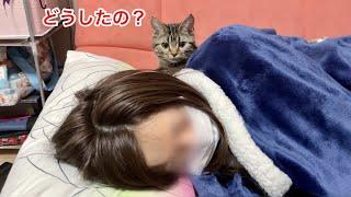 腹痛でダウンしてる飼い主を心配するフリしてベッタリ甘えにきてしまった子猫w