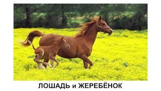 Домашние животные и их детёныши  Развивающее видео