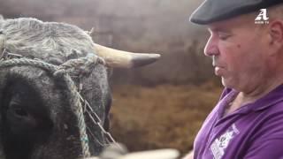 La vache Gasconne en tournée dans la capitale!