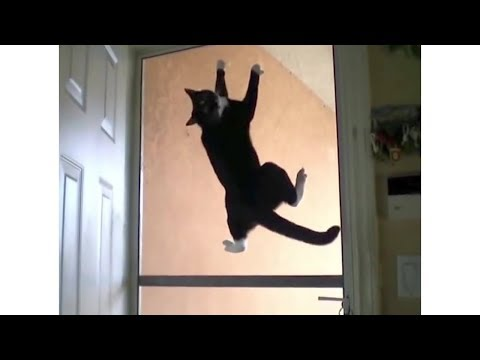 Ninja Cat Escapes