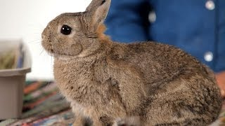 How to Know When to Euthanize a Rabbit | Pet Rabbits