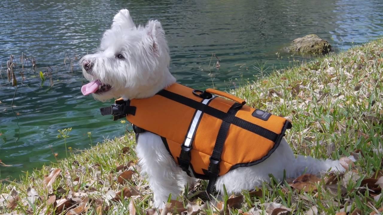 Life Saving Jackets Dogs Water