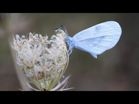 forgotten-worlds---insects-documentation-2018-(4k)