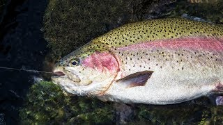 Floating & Fishing a Trout-Filled River!