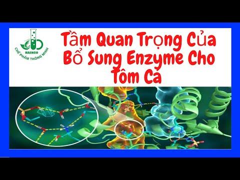 Tầm Quan Trọng Của Bổ Sung Enzyme Cho Tôm Cá