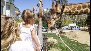 SURPRISE GIRAFFE at the TEAM 10 HOUSE! *CUTE*
