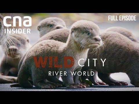 Singapore's Waterways And Its Wild Inhabitants | Wild City: River World | CNA Documentary