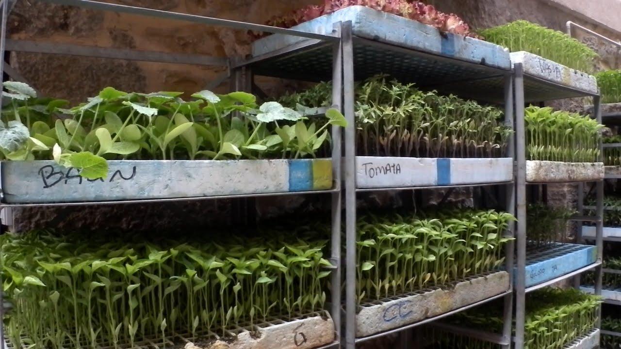 Como distribuir las plantas en el huerto asociacion y - Plantas de huerto ...