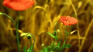 Laura Pausini  ft. james Blunt - Primavera in anticipo