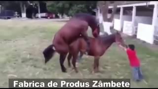 Инвалид конь