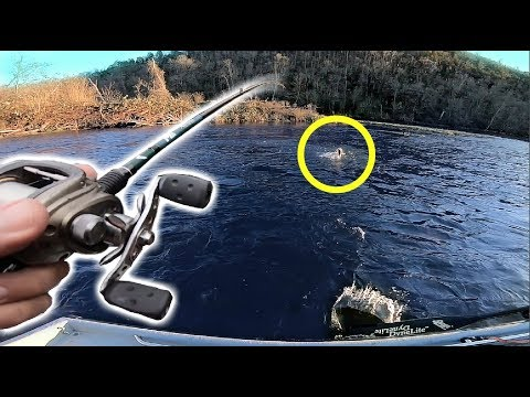 Hunting GIANT Fish in Clear Rivers!!