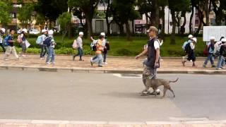 アンカーのブログ ⇒ http://ameblo.jp/anchor-dog/