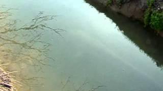 harcsa a folyóban