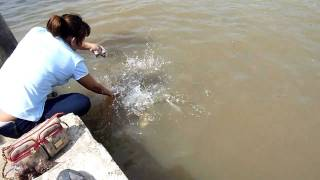 Feeding Fish In The River Kwai