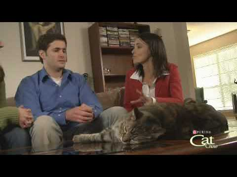 Housecat Housecall® Webisode  Fiona and Gabby