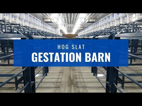 Hog Slat Gestation Video Tour