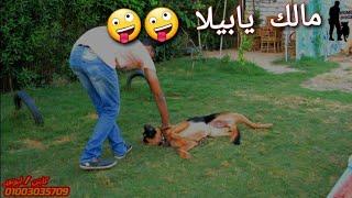 كيف تقنع الكلب بحبك _ والانتباه ليك دايما