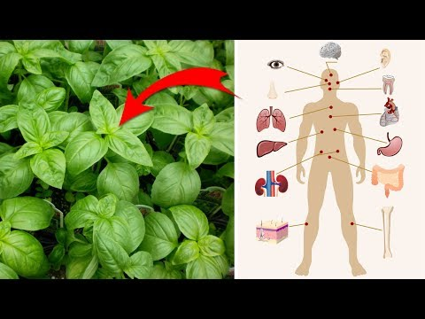 4 Surprising Health Benefits of Basil