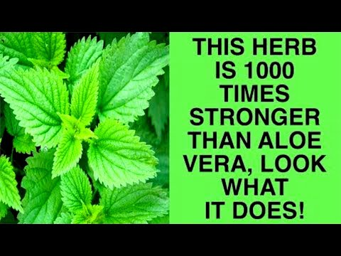 This Herb Is 1000 Times Stronger Than Aloe Vera, See What It Does!