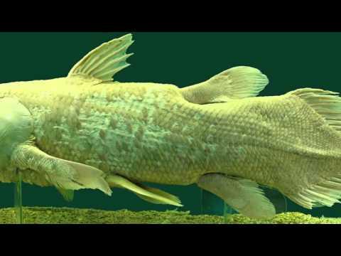 ник 35 рыбы москва знакомства