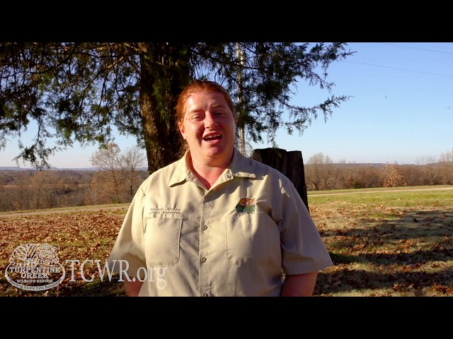Talking Palm Oil on Tiger Tuesday with Turpentine Creek Wildlife Refuge's Education Department