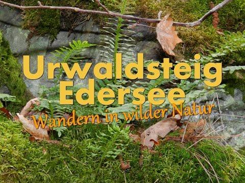 Urwaldsteig Edersee - Wandern in wilder Natur [HD] [Teil 1 von 3
