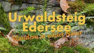 Urwaldsteig Edersee - Wandern in wilder Natur [HD] [Teil 1 von 3]
