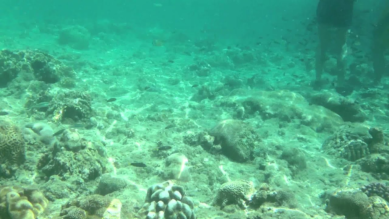 huge discount 601f5 4489c iPhone 4s Lifeproof Case Review & Test Snorkeling 1080P