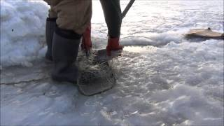 Burbot Fishing on the Yukon River with y...
