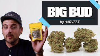 Big Bud By Harvest ( Strain Of The Week) Cannabis Review